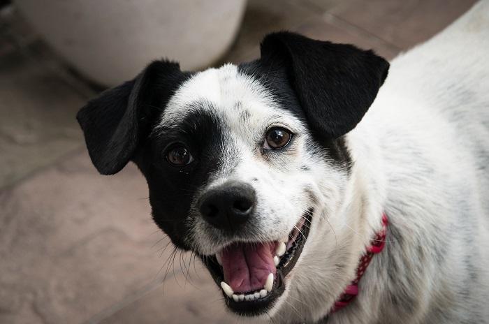 Waarom een gezond gebit zo belangrijk is voor je hond